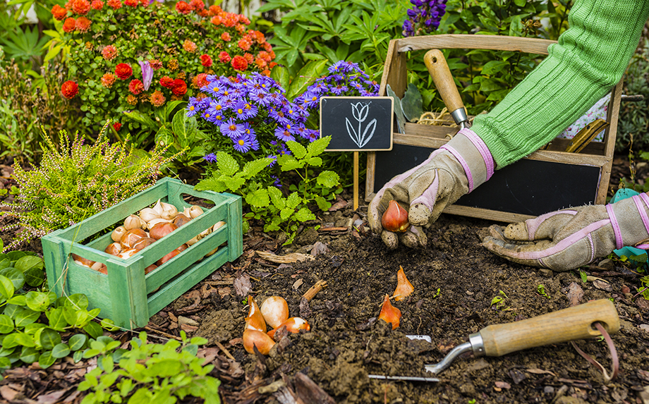 gardening annual plant and garden